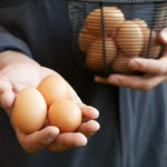 image - cage-free-eggs.jpg