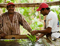 Photo of Two Fairtrade Banana Farmers